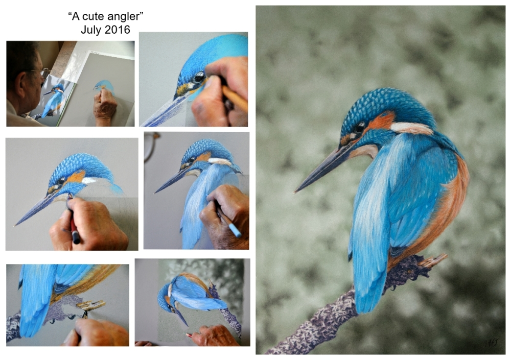 Collage kingfisher