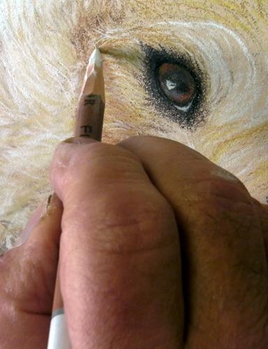 eyes-pencil-crop-ws