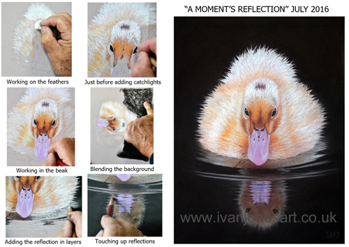 A-moment's-reflection-collage-wm-light.jpg500