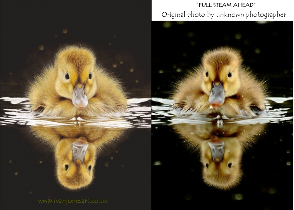 Duckling 2018 after and before